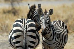 Adumu Safaris - Selous