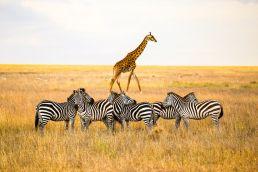 Adumu Safaris - Arusha