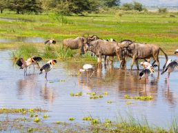Adumu Safaris - Lake Manyara National Park