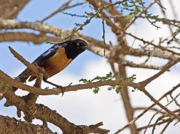 Adumu Safaris - Oldupai Gorge