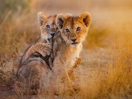 Adumu Safaris - Serengeti National Park