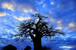 Adumu Safaris - Mkomazi National Park