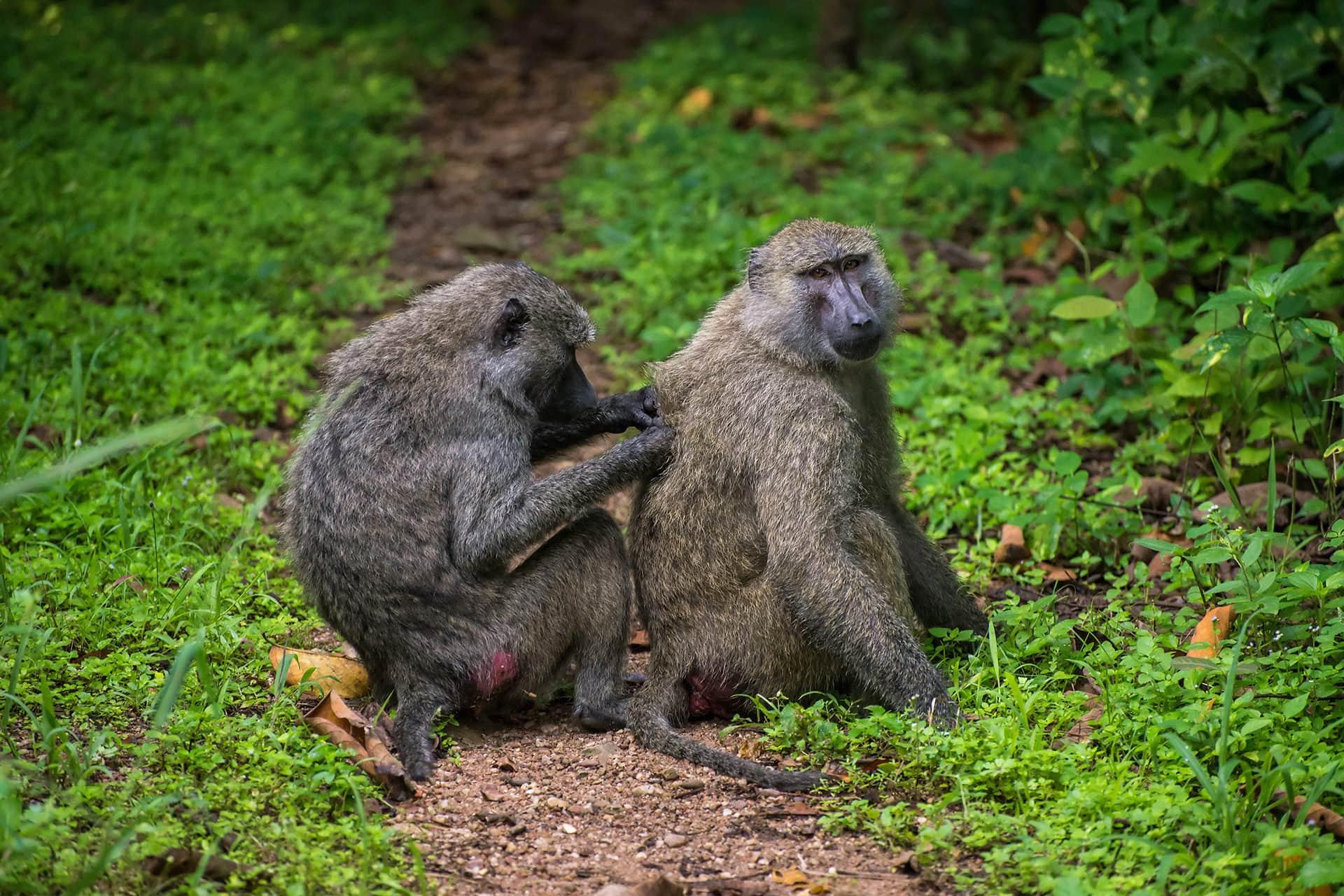 Adumu Safaris - Katavi
