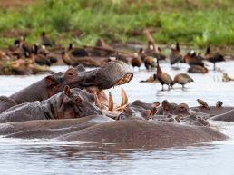 Adumu Safaris - Lake Manyara National Park