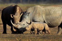 Adumu Safaris - Ngorongoro National Park