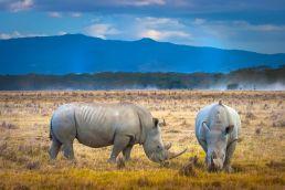Adumu Safaris - Design Your Own