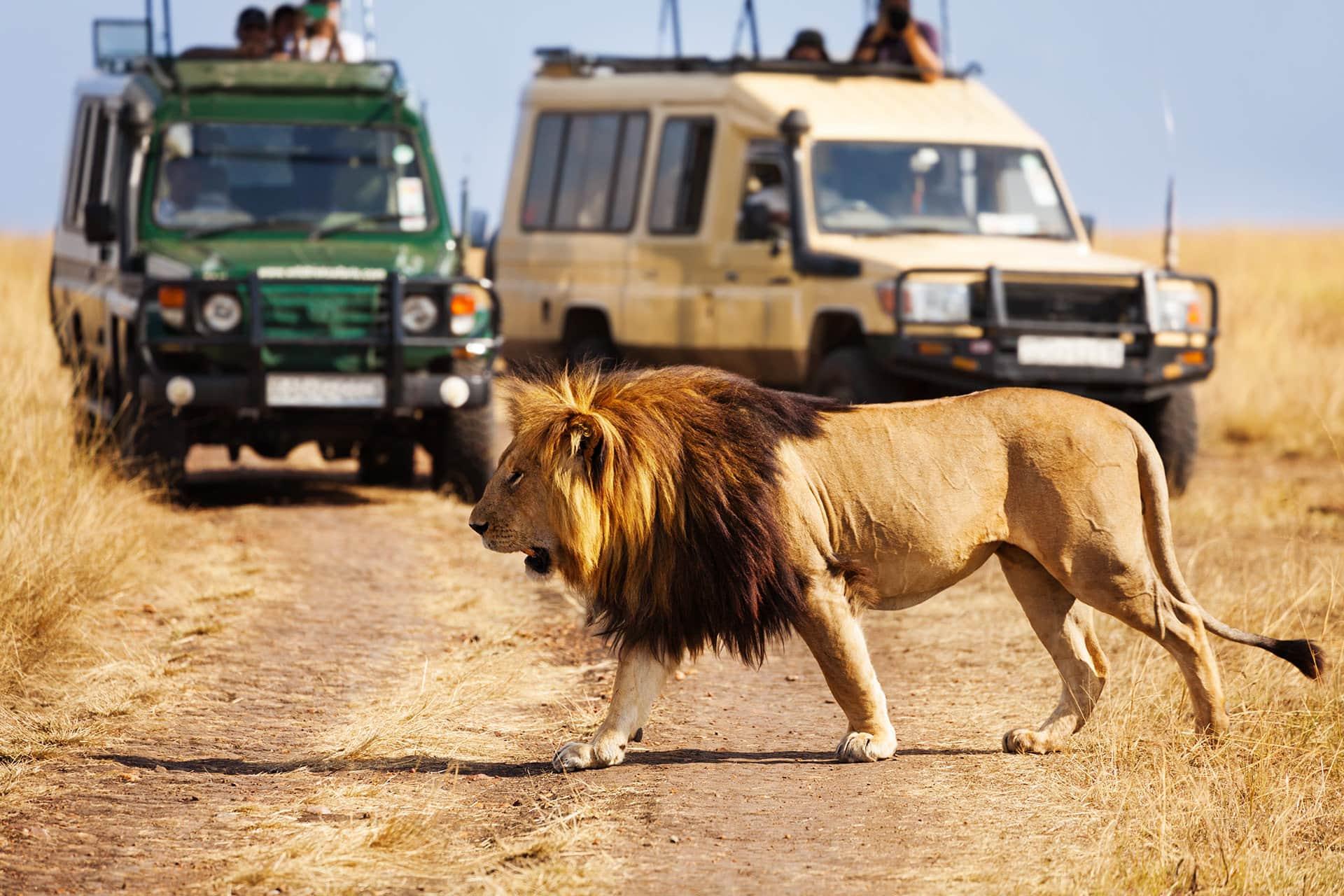 Adumu Safaris Activities - Game Drives