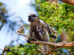 Adumu Safaris - Activities - Zanzibar and the Coast