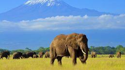 Adumu Safaris - Amboseli