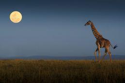 Adumu Safaris - Kenya
