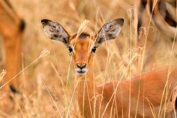 Adumu Safaris - Lake Nakuru