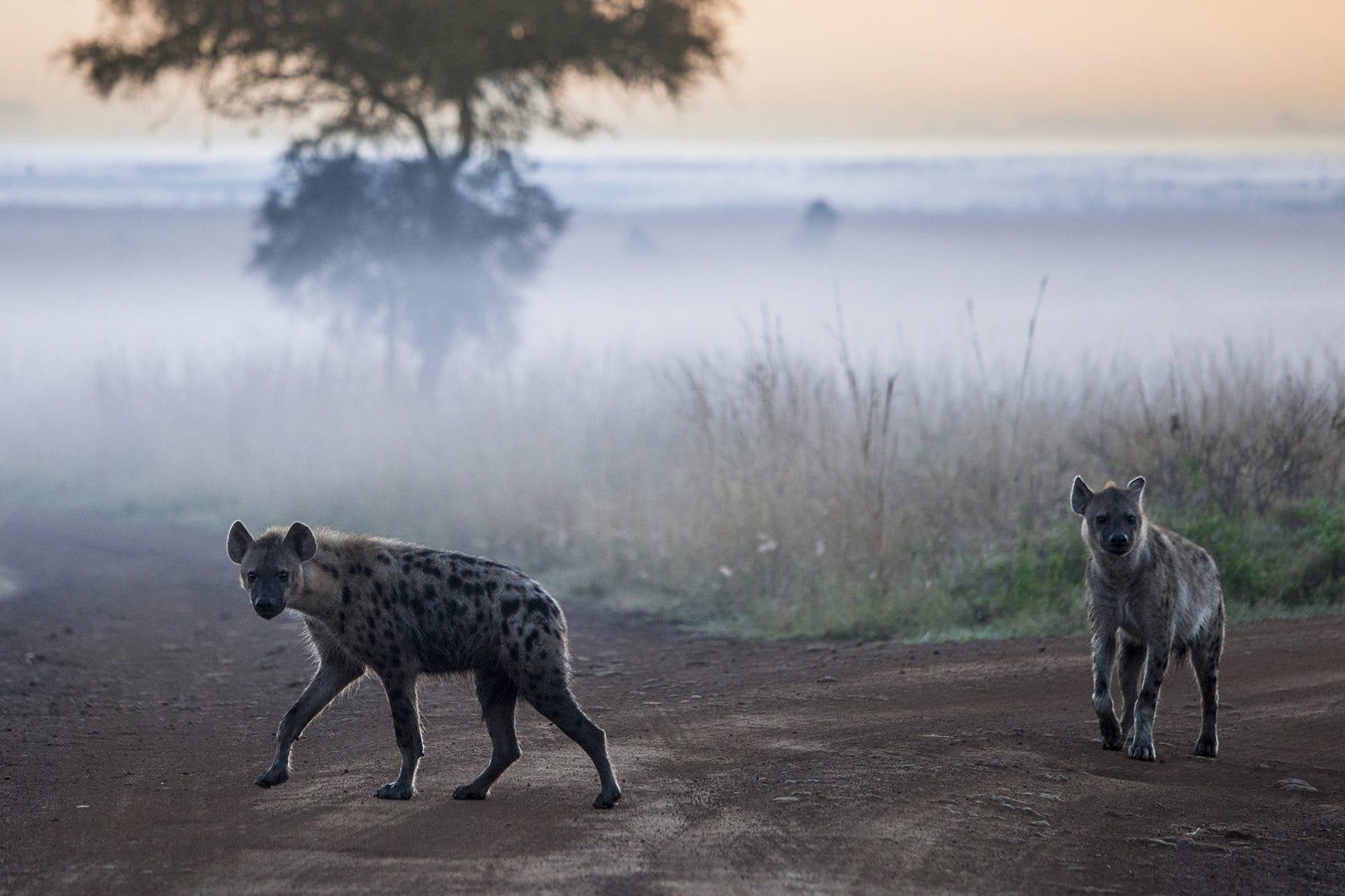 Adumu Safaris - Nairobi