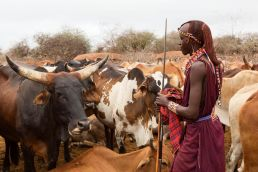 Maasai-Pastoralism