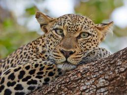 Adumu Safaris - Samburu