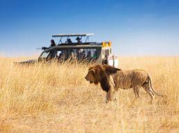 Adumu Safaris - Tanzania North