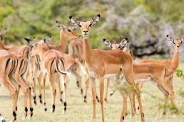 Adumu Safaris - Tanzania South