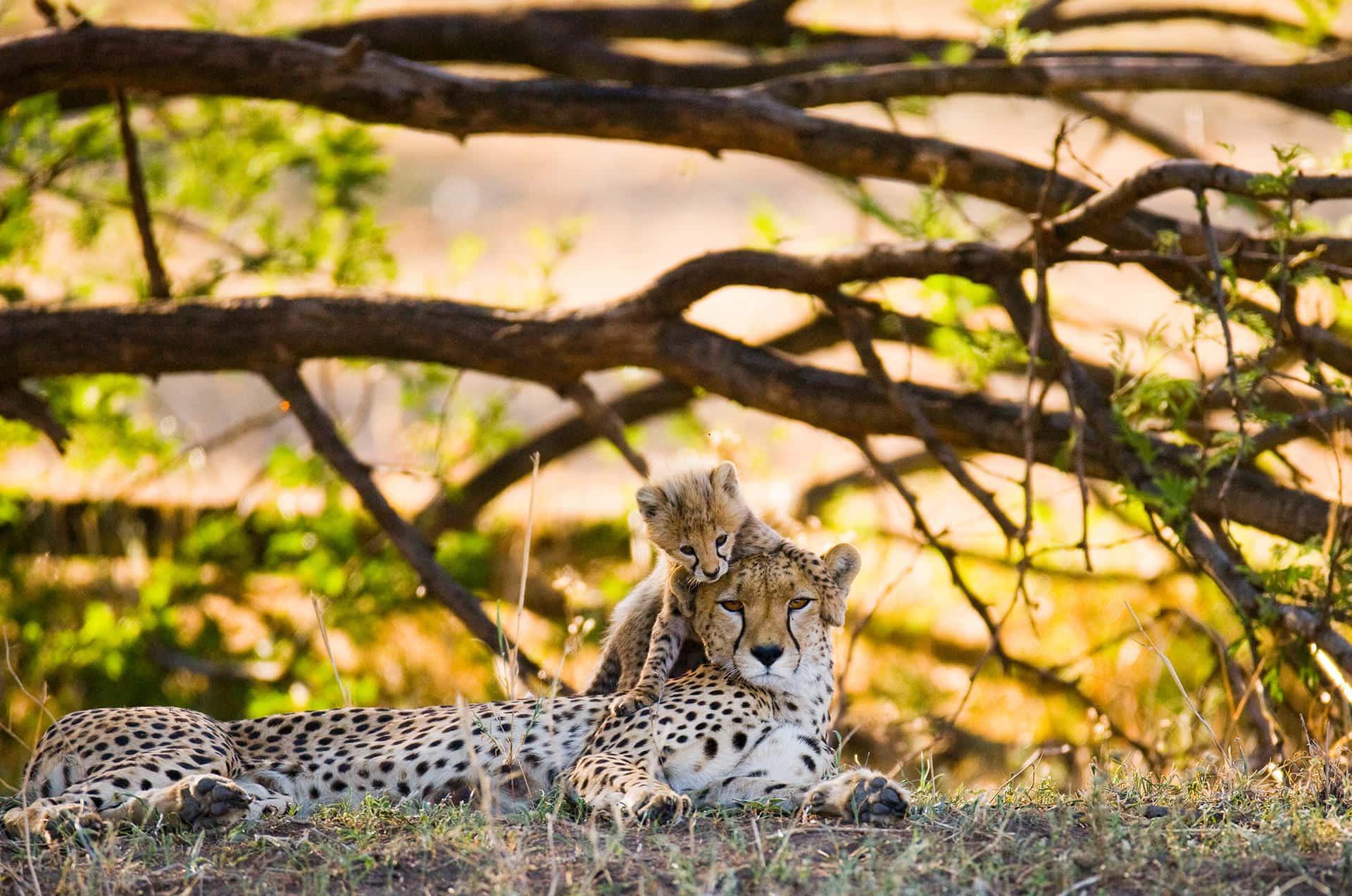 Adumu Safaris - Tanzania - Western Circuit