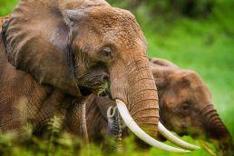 Adumu Safaris - Tarangire