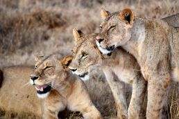 Adumu Safaris - Tsaavo West