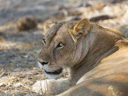 Adumu Safaris - Udzungwa, Mikumi, Ruaha
