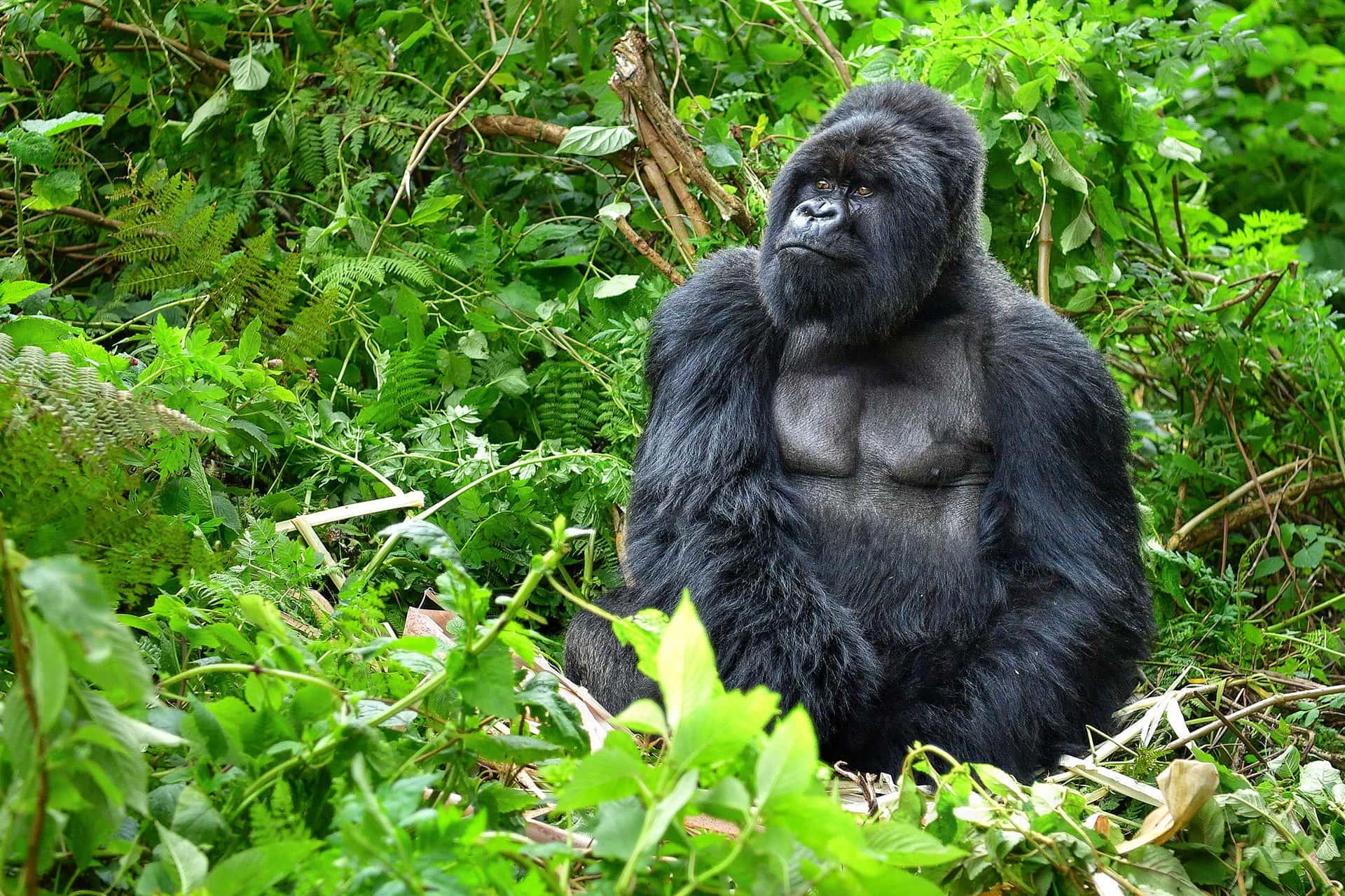 Adumu Safaris - Uganda